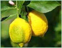 Lime Lemon Oil