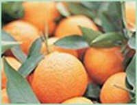 orange-sweet oil