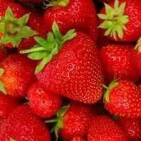 Spray Dried strawberry-powder