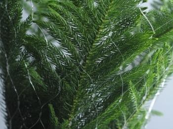 Christmas Nets