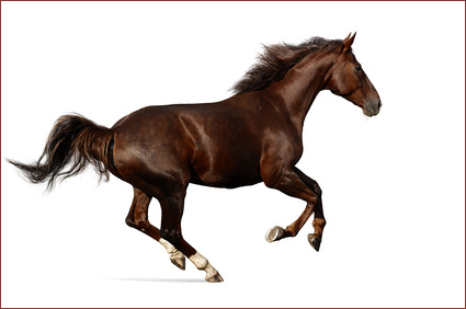 Racing Horse Feed