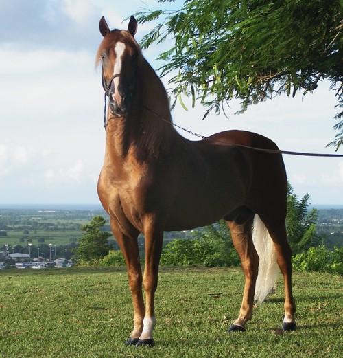 Horse Balancer Feed