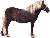 Pony Feed