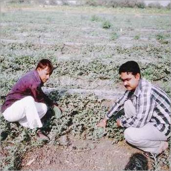 Watermelon Mulching Film