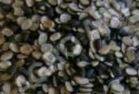 URD DAL WITH COAT (BLACK GRAM)