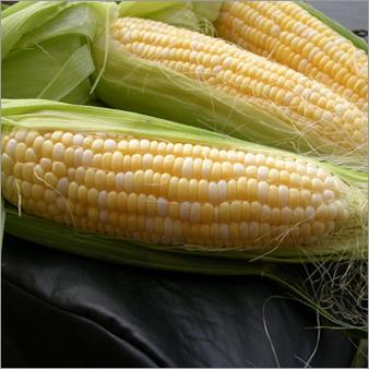 Maize Makka