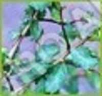 Image 067