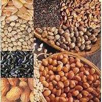Oil Seeds & By-Products Testing
