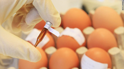 Egg and Egg Product Testing Services