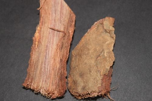 Saraca Indica Bark