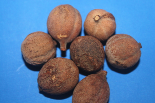 Terminalia Belerica Fruit Extract
