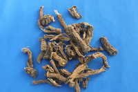Coleus forskohlii Roots Extract