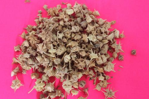 Tribulus Terrestsis Fruits Extract