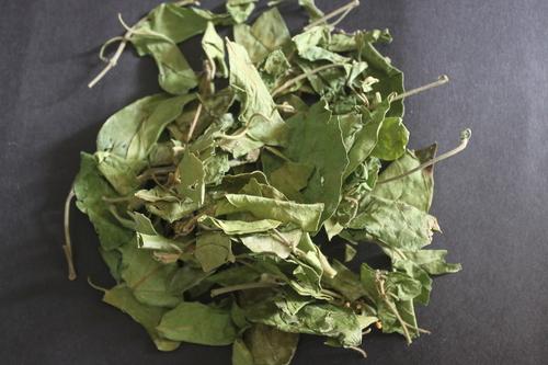 Gymnema Sylvestre Leaves