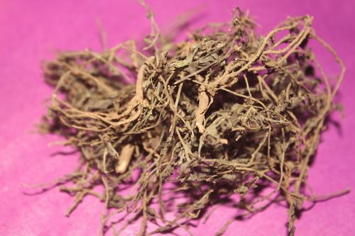 Convolvulus Pluricaulis Herb