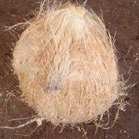 Vietnamese Matured Coconut