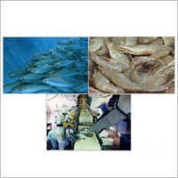 Seafood Processing Chlorine Dioxide