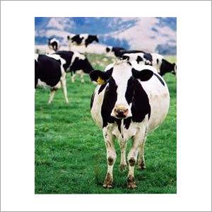 Dairy Farm Chlorine Dioxide Chemical