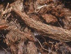 Nardostachys Jatamansi Roots