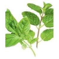 Ocimum Sanctum Leaves