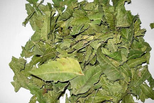 Azadirachta Indica Leaves