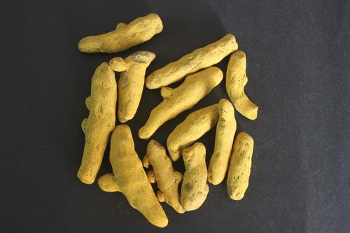 Curcuma longa Rhizomes