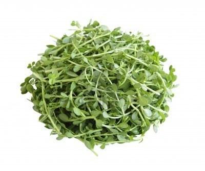 Bacopa Monneri Herb