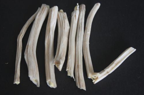 Asparagus Adscendens Roots