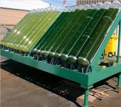 Fermentor Bioreactor Algae