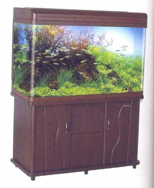 Mj Aquarium R6 Fish Aquarium Home H 16 17 Vikas Marg Laxmi