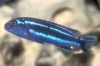 Fish Maingano