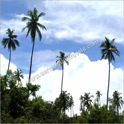 Andaman Beauty Tour Package Services
