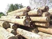 Merbau Wood Logs