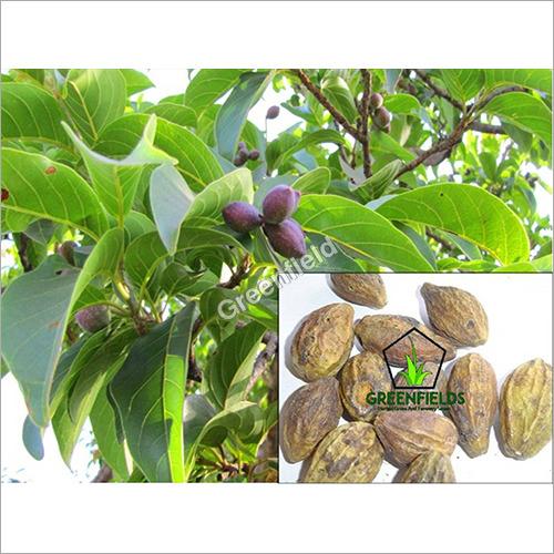 Harra Medicinal Seeds ( Terminelia chebula )