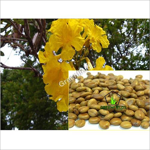 Amaltas Ornamental Seeds ( Cassia fistula )