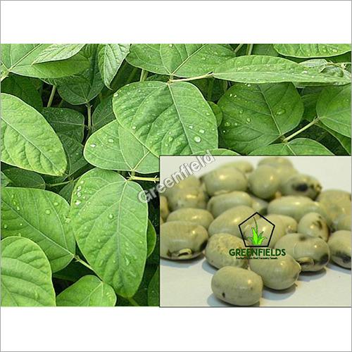 White Kinvach Medicinal Seeds (Mucuna Prurita)