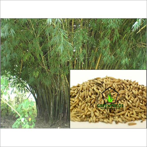 Tree / Forestry Seeds