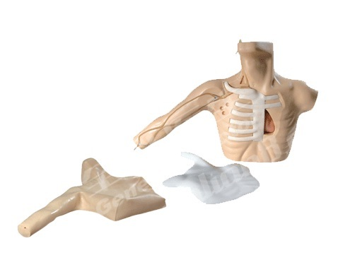 Catheterization Simulator Models