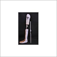 Spring Liver Knee Joint