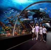 Sentosa Island with optional S.E.A Aquarium, Singapore