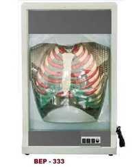 Functional Human Respiration Model ( BEP-333 )