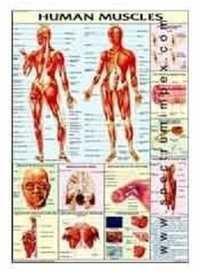 Human Physiology Charts 30 No's