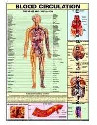 HP03S-Blood Circulation