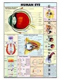 HP06S-Human Eye
