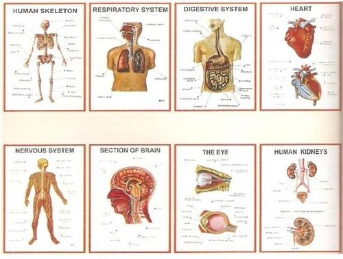 Anatomy 3D Charts