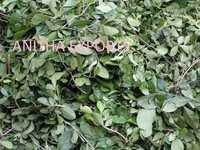 Pooja Leaves