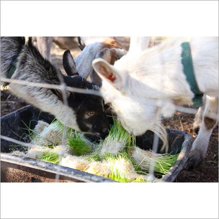 Hydroponic Goat Feed Machinery