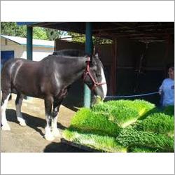 Hydroponic Horse Fodder Machinery