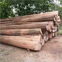 Raw Teak Wood Logs