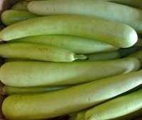 Bottal gourd